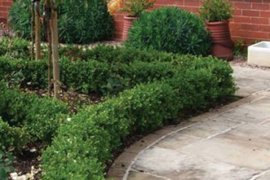 hedge-border-with-paving