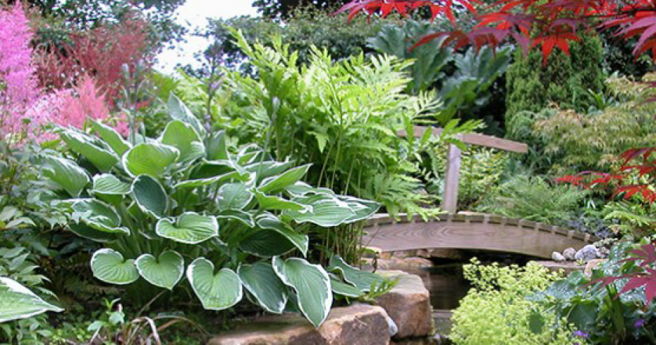 bridge-over-pond-with-plant-border