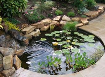 fish-pond