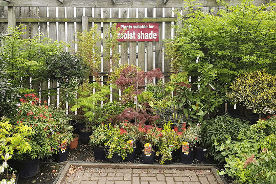 Wilkinsons Moist Garden Centre