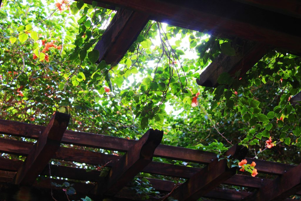 Pergola with leaves above