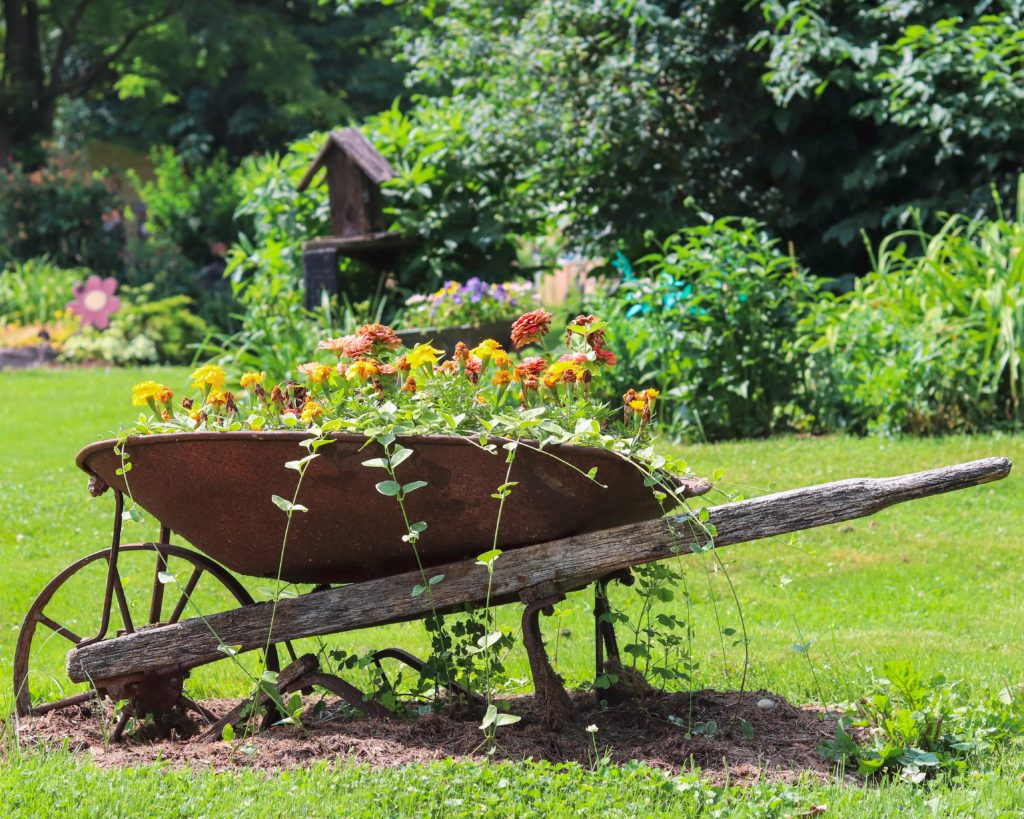 brown and black wheelbarrow near green trees during daytime